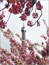 Acrylglas print  Eiffel Tower top and cherry blossoms - Carina Okula