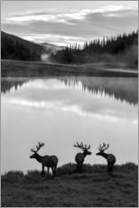 Aluminium print  Rocky Mountain National Park - Jaynes Gallery
