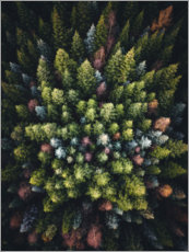 Acrylglas print  Colorful conifers from above - Lukas Saalfrank