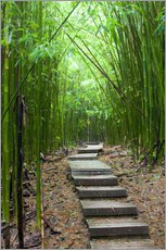 Gallery print  Wooden path in the bamboo forest - Jim Goldstein