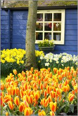 Gallery print  Tulips in the Keukenhof in Lisse - Jim Engelbrecht