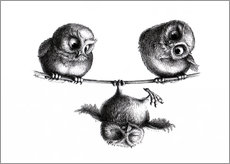 Gallery print  Three owls - high wire act - Stefan Kahlhammer