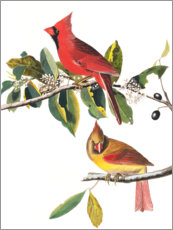 Muursticker  Cardinals - John James Audubon