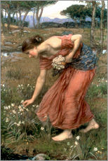 Muursticker  Narcissus - John William Waterhouse