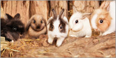 Muursticker  bunnys - Photoplace Creative