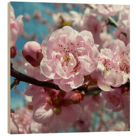 Hout print  Cherry Blossoms - blackpool