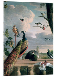 Acrylglas print  Palace of Amsterdam with exotic birds - Melchior de Hondecoeter