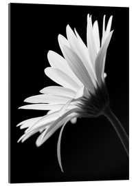 Acrylglas print  The flower - Falko Follert