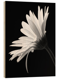 Hout print  The flower - Falko Follert