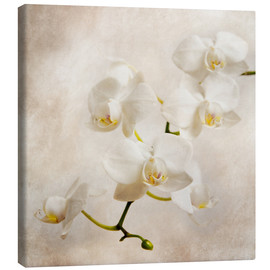 Canvas print  Witte orchidee - Hannes Cmarits