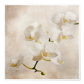 Premium poster  Witte orchidee - Hannes Cmarits