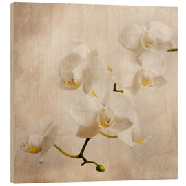Hout print  Witte orchidee - Hannes Cmarits