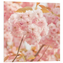 PVC print  Japan Cherry - INA FineArt