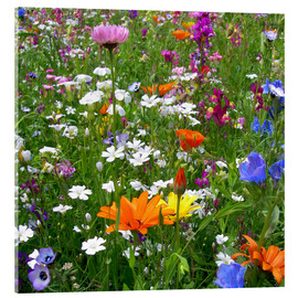 Acrylglas print  Flower meadow - blackpool