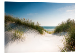 Acrylglas print  Dune with shiny marram grass - Reiner Würz