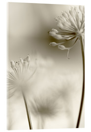 Acrylglas print  Softly - Evelyn Meyer