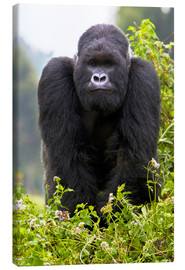 Canvas print  Mountain Gorilla - Ralph H. Bendjebar
