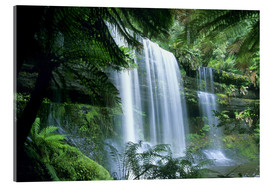 Acrylglas print  Russell Falls and tree ferns - Kevin Schafer