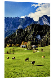 Acrylglas print  Alps and pasture cows - Ric Ergenbright