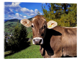 Acrylglas print  Cow in the Dolomites - Ric Ergenbright