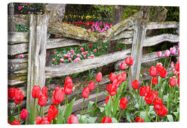 Canvas print  Tulips in front of a wooden fence - Jamie & Judy Wild