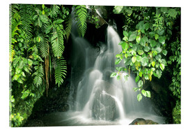 Acrylglas print  Small waterfall in the rainforest - Kevin Schafer
