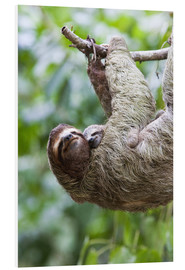 PVC print  Sloth with baby on the branch - Jim Goldstein