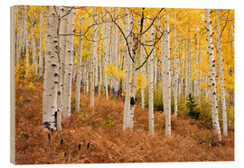 Hout print  Aspen forest and ferns in autumn - Don Grall