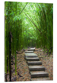 Acrylglas print  Wooden path in the bamboo forest - Jim Goldstein