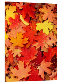 PVC print  Colorful maple leaves - Scott T. Smith