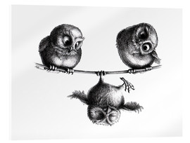 Acrylglas print  Three owls - high wire act - Stefan Kahlhammer