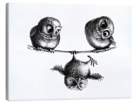 Canvas print  Three owls - high wire act - Stefan Kahlhammer