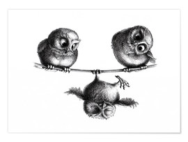 Premium poster  Three owls - high wire act - Stefan Kahlhammer