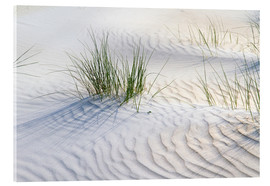 Acrylglas print  Dunegrasses in the sand - Jürgen Klust