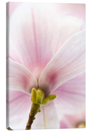 Canvas print  Magnolia - Jan Schuler