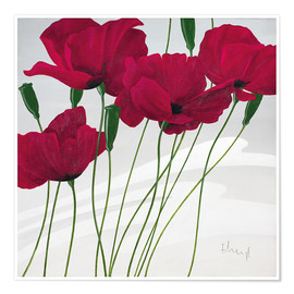 Premium poster  Poppies swayed by the wind - Franz Heigl