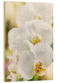 Hout print  White Orchid - Suzka
