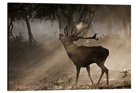 Aluminium print  Roaring deer in the morning - Alex Saberi