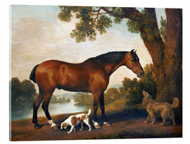 Acrylglas print  Horse and two dogs - George Stubbs
