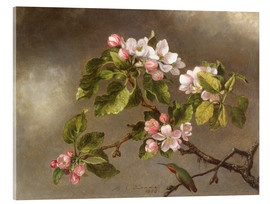 Acrylglas print  Apple Blossoms and a Hummingbird - Martin Johnson Heade