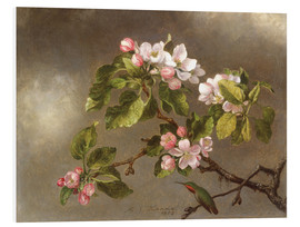 PVC print  Apple Blossoms and a Hummingbird - Martin Johnson Heade