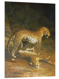 PVC print  Two Leopards lying in the Exeter Exchange - Jacques Laurent Agasse