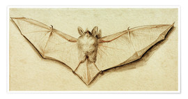 Premium poster  Bat with spread wings - Hans Holbein d.J.