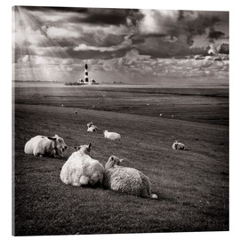 Acrylglas print  Talking Sheep - Carsten Meyerdierks