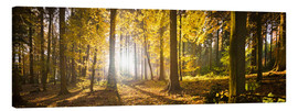 Canvas print  Autumn forest backlit with sunshine and yellow autumn leaves - Jan Christopher Becke