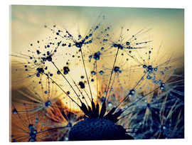 Acrylglas print  Dandelion in the sunset - Julia Delgado