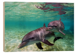 Hout print  Two bottlenose dolphins of the Caribbean - Stuart Westmorland