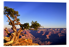 Acrylglas print  Grand Canyon in Arizona - Paul Thompson