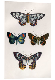 Acrylglas print  Butterflies - English School