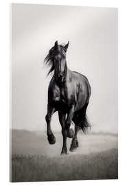 Acrylglas print  Fries paard in de steppe - Monika Leirich